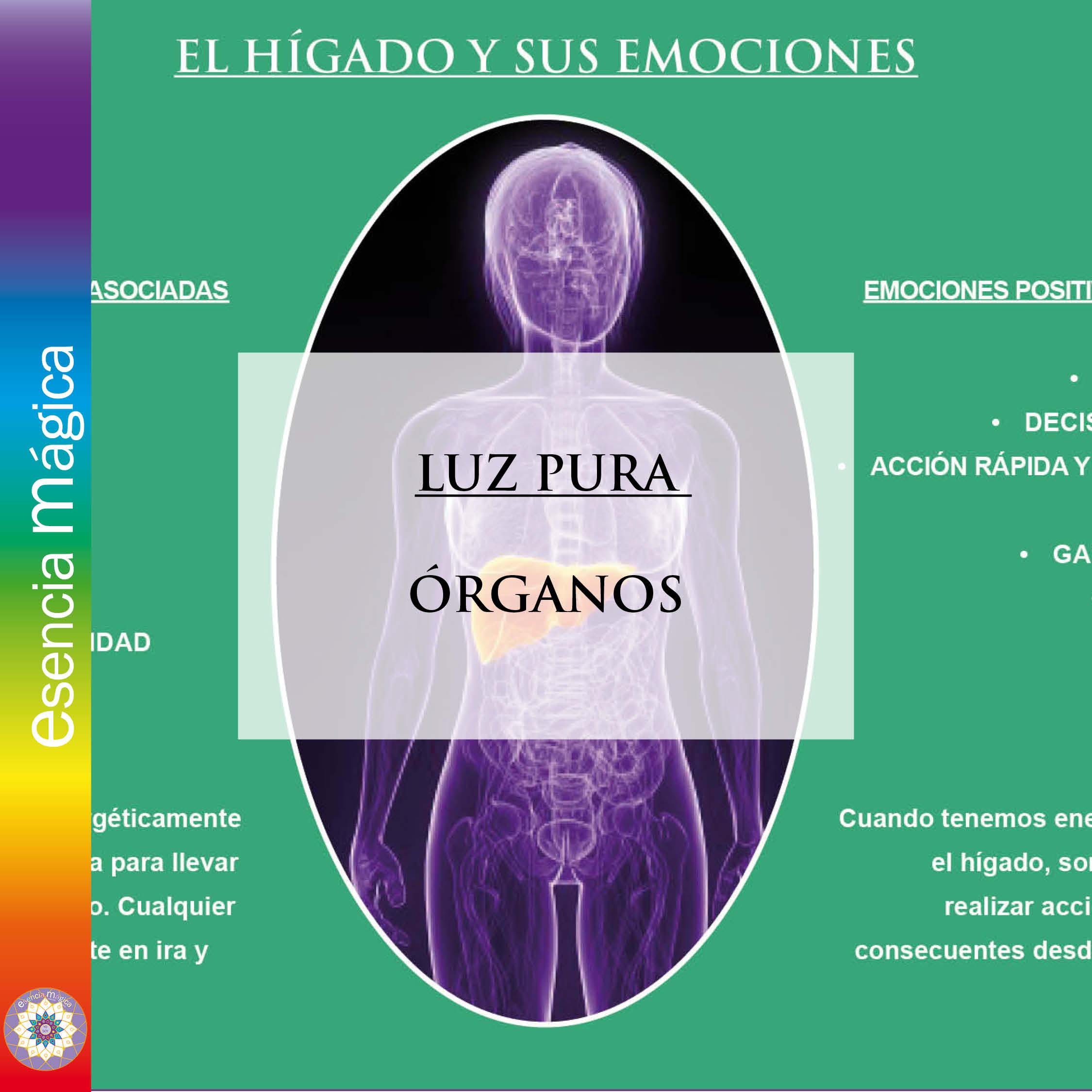 Luz Pura organos